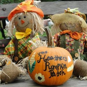 ms. heather's pumpkin patch
