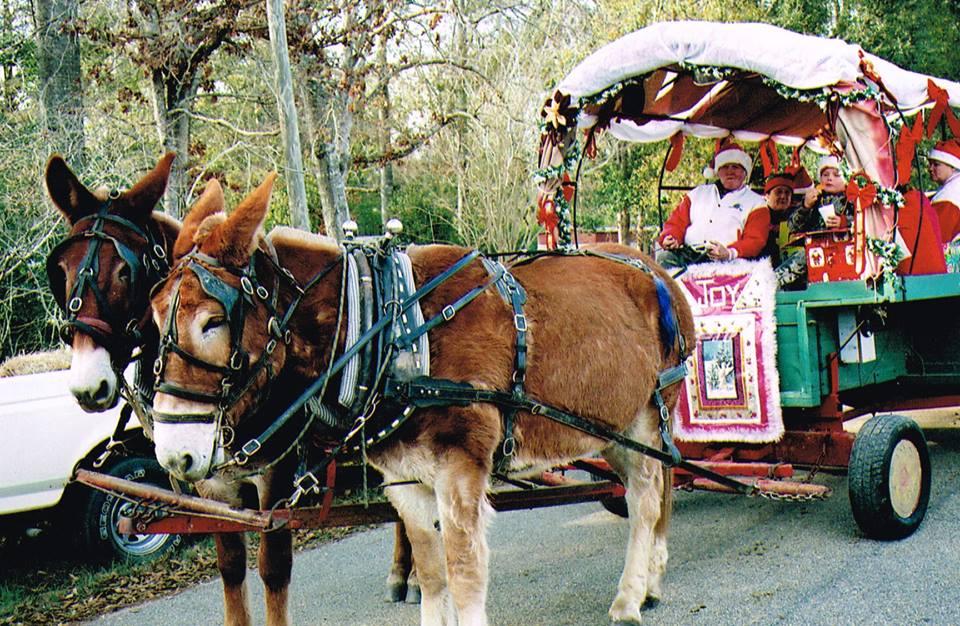 blog horse and wagon parade